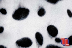PELO-ANIMALES150-Dalmata